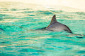 Harbour porpoise in a zoo Royalty Free Stock Photo