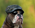 Hard army bulldog Royalty Free Stock Photo