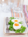 Hard boiled eggs with parsley on a plate Royalty Free Stock Photo