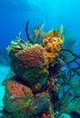 Hard corals near cayo largo cuba composition Stock Photography