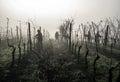 image photo : Hard work in vineyard