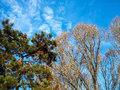 Hardwoods and conifers autumnal park with trees against blue sky together in forest Royalty Free Stock Images