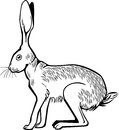 Hare crouching ilustration of a rabbit or eps file pending Royalty Free Stock Photos