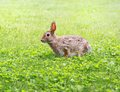 Hare in grass during summer Stock Photography
