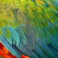 Harlequin macaw feathers colorful background texture Stock Photos