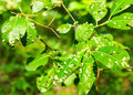 Harmful insects of a garden destroy leaves tree Stock Photos