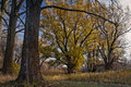 Harmonious combination of trees . Royalty Free Stock Photos
