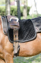 Harness detail of a modern mounted on a horse Stock Photography
