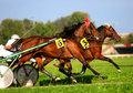 Harness racing Royalty Free Stock Photography