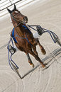 Harness racing Stock Photography