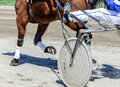 Harness racing horse harnessed to lightweight strollers Royalty Free Stock Photos