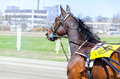 Harness racing horse in motion Stock Photos