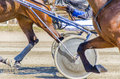 Harness racing horses harnessed to lightweight strollers Royalty Free Stock Images