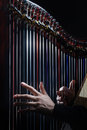 Harp strings Royalty Free Stock Photo