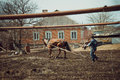 Harrow horse processing of land with the help of a and spring Stock Image