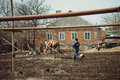 Harrow horse processing of land with the help of a and spring Royalty Free Stock Photo
