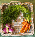 Harvest basket parsnips and carrotts in a wicker Stock Photos