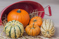 Harvest bounty farm fresh squash and pumpkins with straw and basket Stock Image