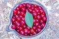 Harvest of cherries.