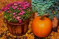 Harvest colors a ripe pumpkin next to a basket of flowers in autumn Stock Photography