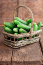 Harvest cucumbers in a basket Stock Images