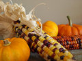 Harvest decor Stock Images