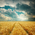 Harvest field and low clouds Royalty Free Stock Photo