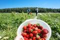 Harvest Fresh Organic Strawber...