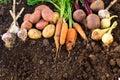 Harvest of fresh vegetables on ground in garden. Royalty Free Stock Photo