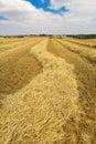 Harvest landscape Стоковые Фотографии RF