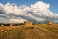 Harvest landscape Royalty Free Stock Photo
