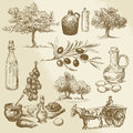 Harvest and olive product hand drawn collection Stock Photography