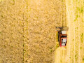 Harvest of rapeseed field. Royalty Free Stock Photo