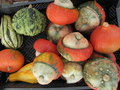 Harvest season and decoration with gourd pumpkin Stock Images