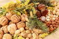 Harvest season, nuts Royalty Free Stock Photo