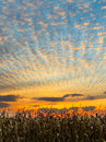 Harvest Sunset Royalty Free Stock Photo