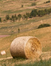 Harvest time agricultural landscape with hay bale bales in field cultivated Royalty Free Stock Images