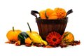 Harvest time basket with autumn vegetables on a white background Stock Images