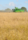 Harvest time a combine harvester cuts the crop on a sunny day Royalty Free Stock Photos