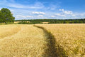 Harvest time moscow region russia Royalty Free Stock Photos
