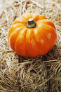 Harvest time, pumpkins Royalty Free Stock Photography