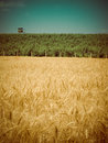 Harvest time retro golden wheat field with vineyard and control post on the horizon in the style Stock Photo