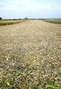 Harvested corn field remains on a at autumn austria Stock Photo