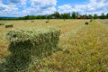 Harvested Hay Bales Royalty Free Stock Photo