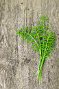 Harvested horsetail several stalks of curative and healthy plant ready for tea or drying Royalty Free Stock Image