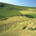 Harvested Meadow With Hay Bales In Cezallier, Puy De Dome, Auvergne-Rhone-Alpes, France