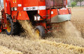 Harvester blow out of straw and separation in the wheat field Stock Image