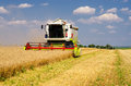 Harvester combine harvesting wheat on sunny summer day Royalty Free Stock Photo