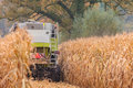 Harvesting cereals autumn mechanical harvester Stock Photography