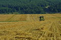 Harvesting combine farmer wheat with the Stock Images